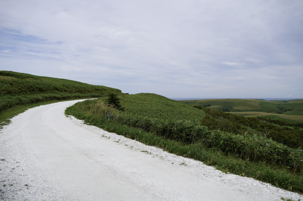 白い貝殻の道(頂上付近)